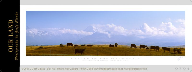 9394 - Cattle in the Mackenzie - Sample Pano