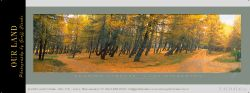 16966 - Leaning Larches - Sample Pano