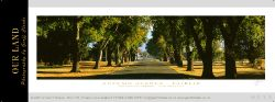 9533-37 - Autumn Avenue - Fairlie Sample Pano