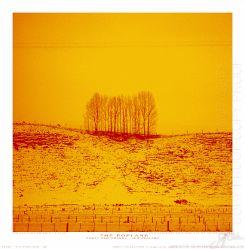 13103 Poplars Totara Valley - Super Large Sqaure (RGB)
