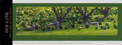 14385 - Springtime - Totara Valley - Sample Pano
